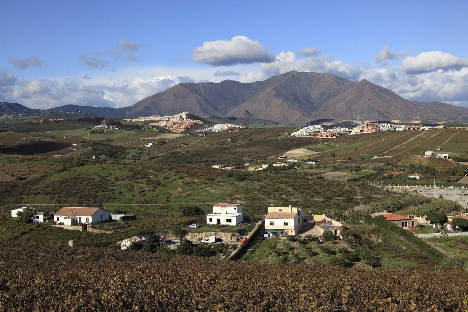 Viñas de Manilva con Sierra Bermeja al fondo