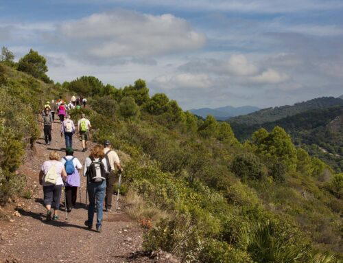 Senderismo y ornitología en Sierra Crestellina